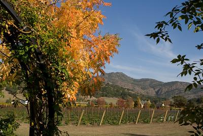 Napa Valley - Oct 2007