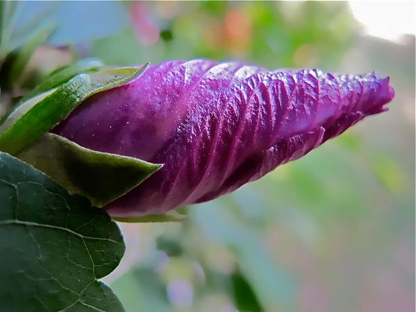 tightlywrappedflower