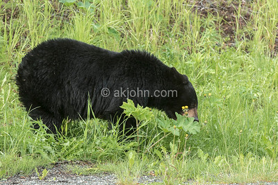 EARLY MORNING BEAR VIEW