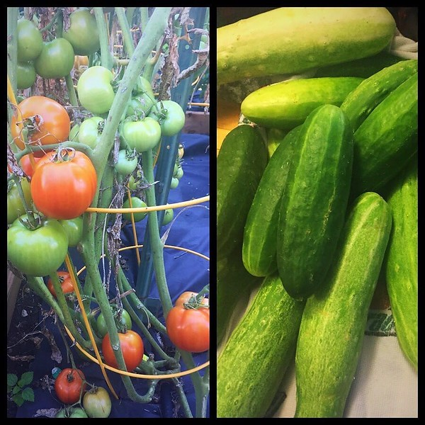 Friends...do you need a tomato or a cucumber? Or 7? Let us know!!