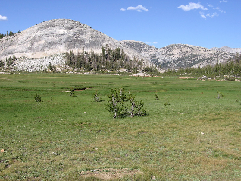 Meadow near Sunrise High Sierra Camp, and low un-named dome to east. The dinner bell for guests was ringing (clanging?) as I walked through here. Small pine trees in meadow are artifacts of overgrazing in the past, and should be removed to allow meadow to fully recover.