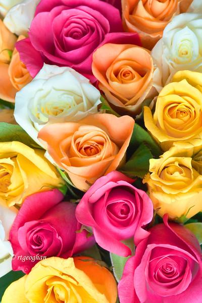 Sept 3_Rose Bouquet_0092.jpg