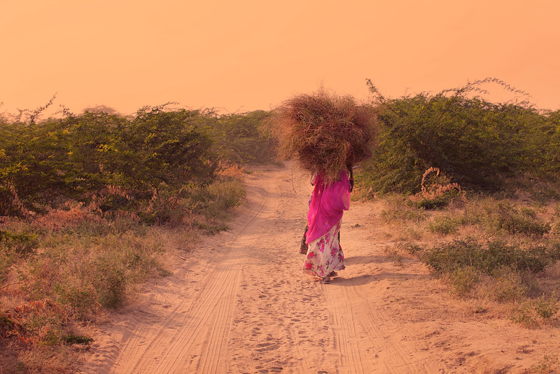 India 3274.jpg