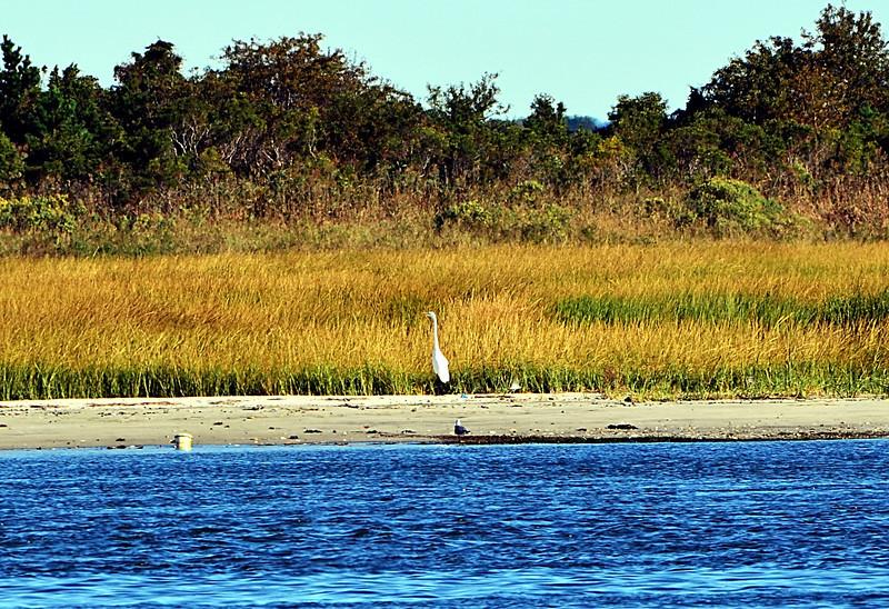 Egret and Seagull 2.jpg