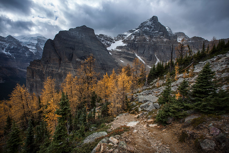 Mountain Larches