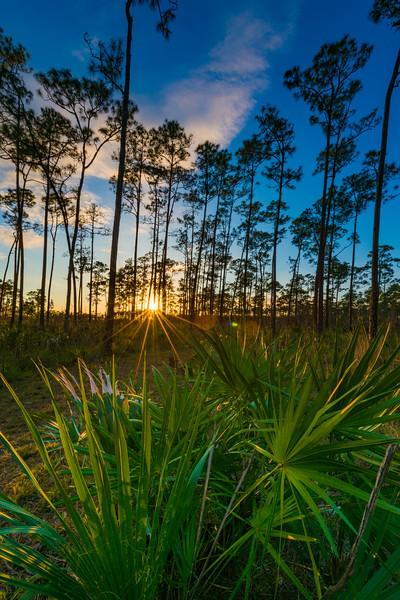 Everglades (3 of 37).jpg