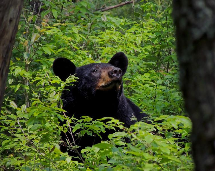 bear 02.jpg