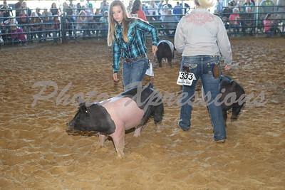 Swine Show 2015