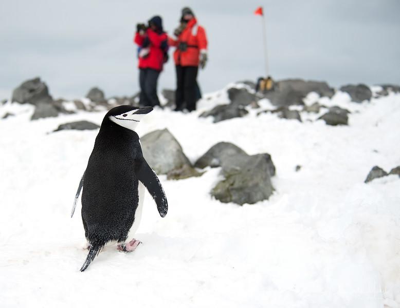091204_penguin_island_8172.jpg