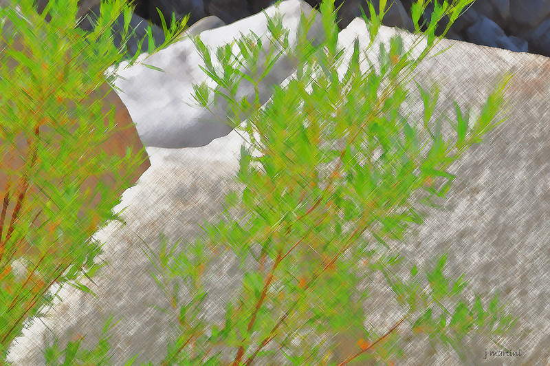 river brush 8-20-2010.jpg