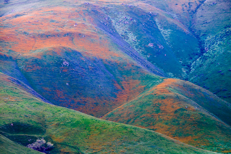 Bear_Mountain_Wildflowers_Arvin_Southern_California_Colorful_DSC5814.jpg