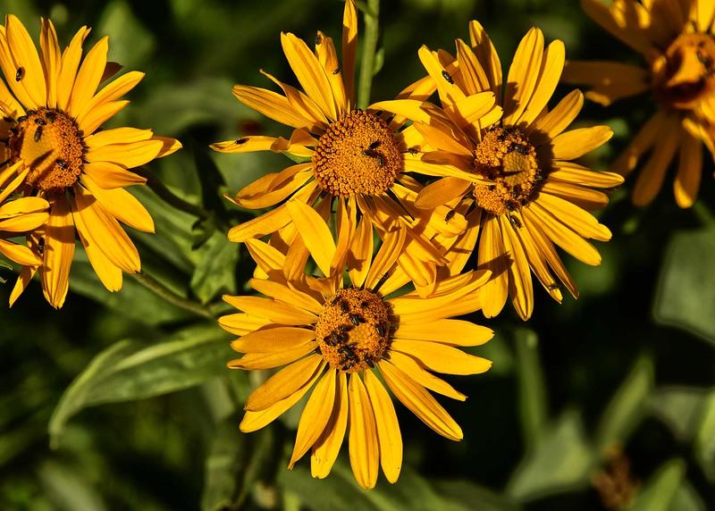 NEA_0025-7x5-Flowers.jpg