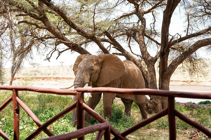 safari-2018-5.jpg