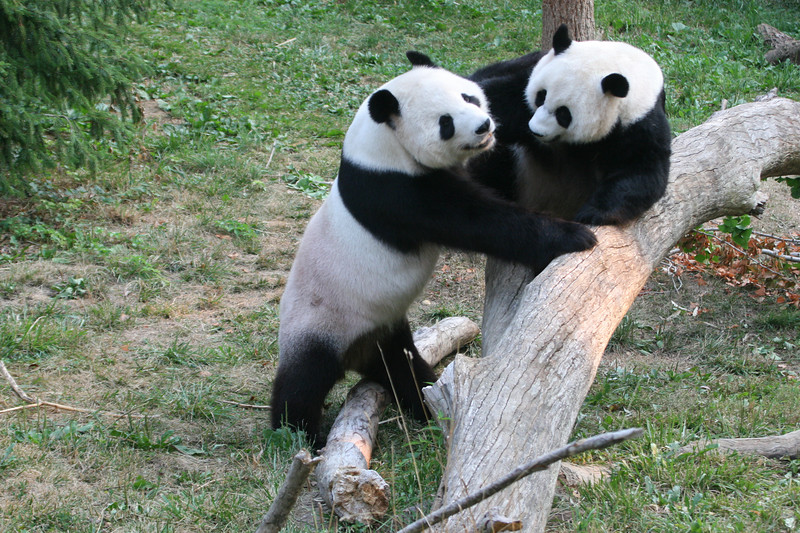 Panda080407_0028.JPG