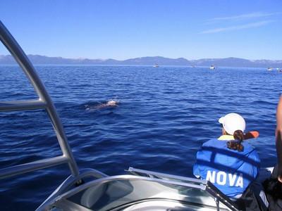2007 Trans-Tahoe Open Water Swim