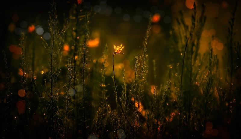 The Magic of Light-260.jpg