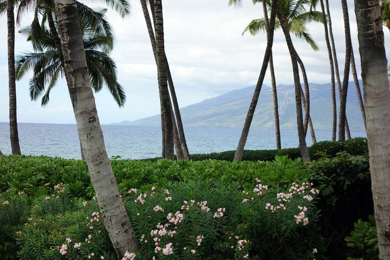 2014-02-15-0003-Maui-Hale Ohia.jpg