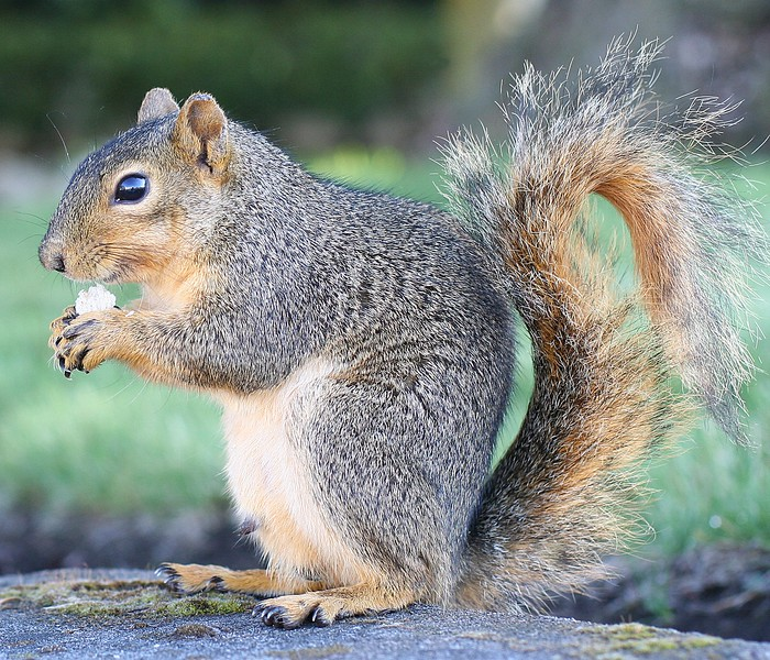 squirrel01.jpg