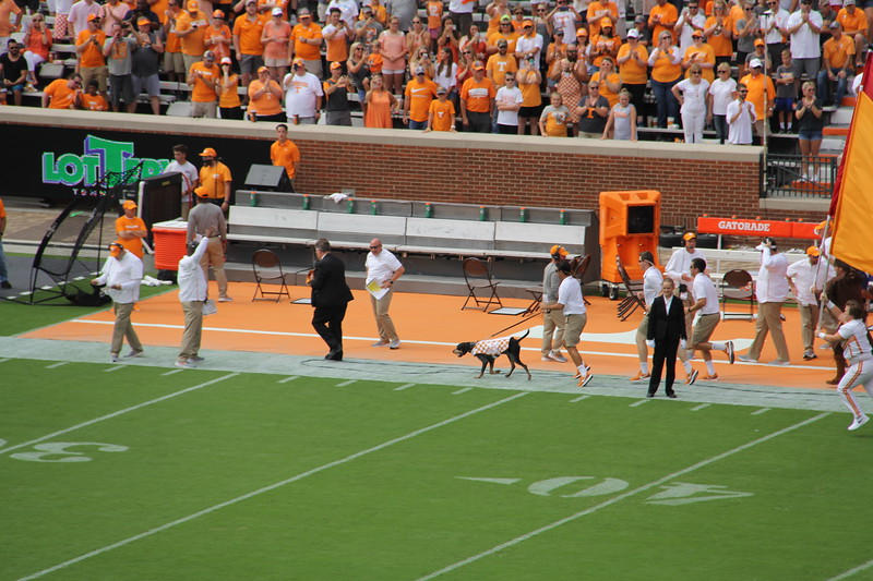 "the mascot ""Smokey"" runs before the game and anytime UT scores"