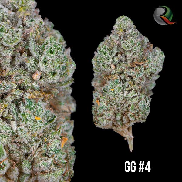 GG#4.jpg