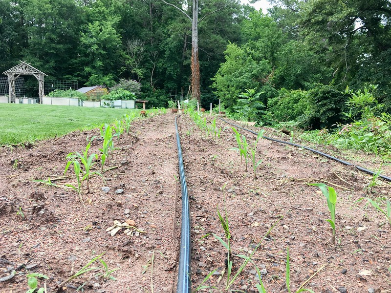 June 5 Farm Chastain-1.jpg