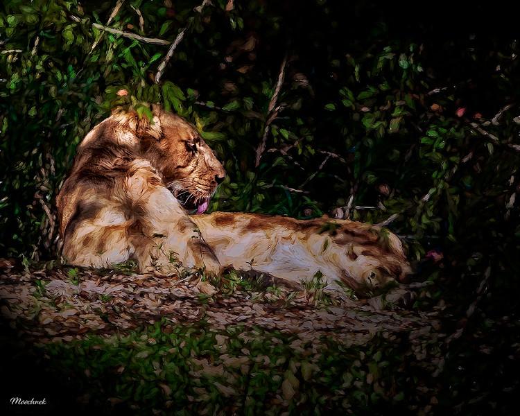 lion_Feb012013_1295-web1200x1500U100.jpg