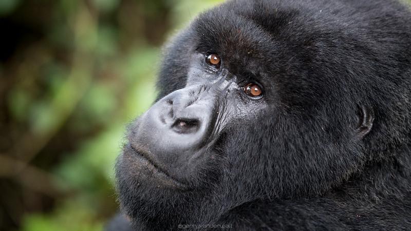 June - Rwanda