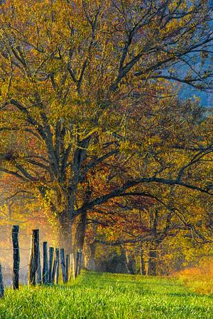 Autumn in The Smoky Mountains