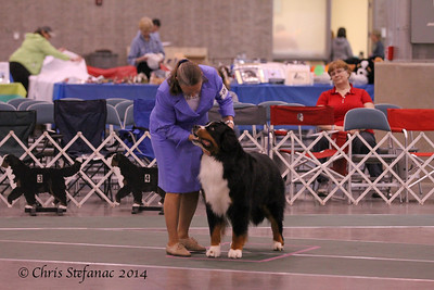 Versatility Excellent 7 yrs & over Dogs BMDCA 2014