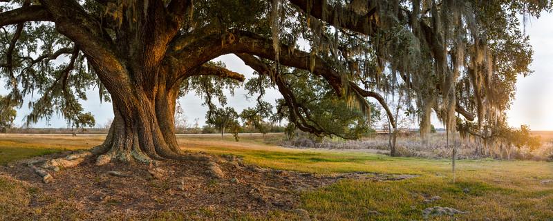 pass oak tree Panorama4.jpg