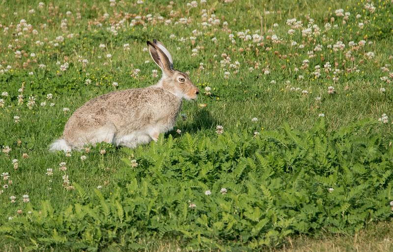 Small Mammals, like rabbits and squirrels