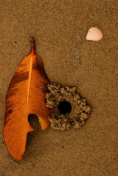 DSC_9407 Leaf Shell Sand Burrow PS- LL tnef +++++.jpg