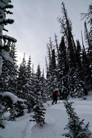 Tree Skiing with Jon MLK Day 2019