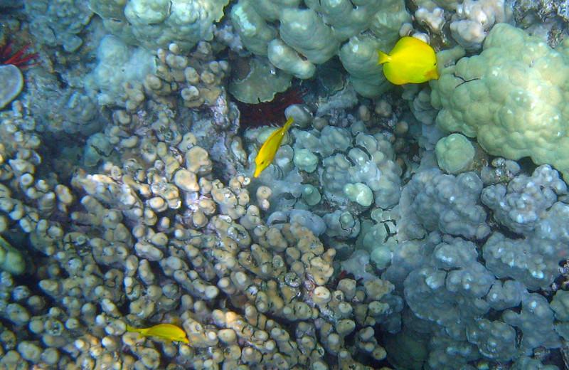 426- 20080416- Hawaii 20-Snorkelling IMG_0585.jpg