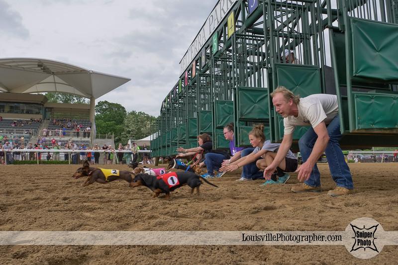 Belterra Park 2017 Wiener Dog Races-19.jpg