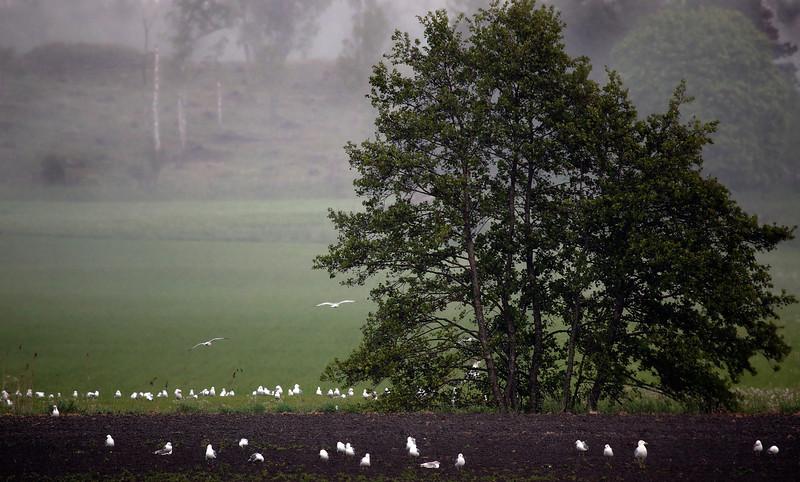 Dag_050_2012-maj-31_6871.jpg
