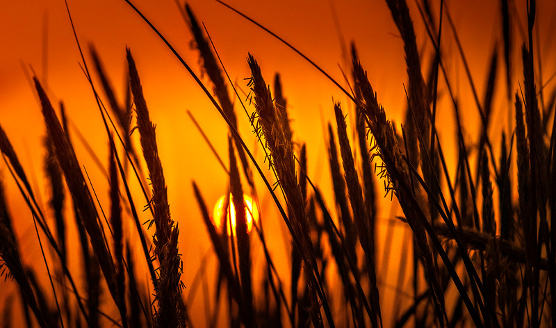 The Magic of Light-095.jpg