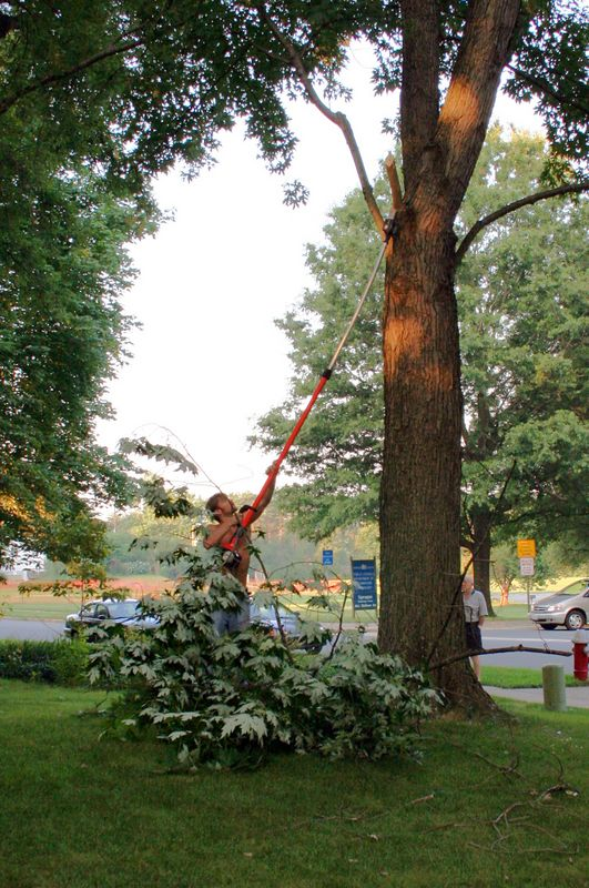Trim a few branches to make a hole so Cranky's boom can swing.