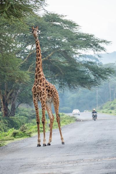 Jay Waltmunson Photography - Kenya 2019 - 004 - (DSCF9360).jpg