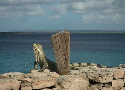 Bonaire 2007