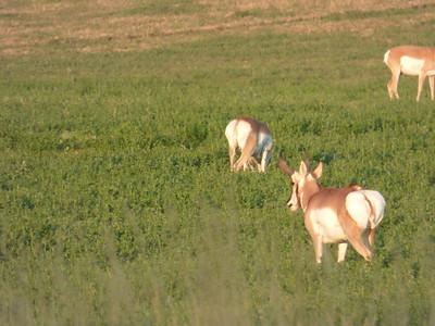 Spearhead Ranch 2017
