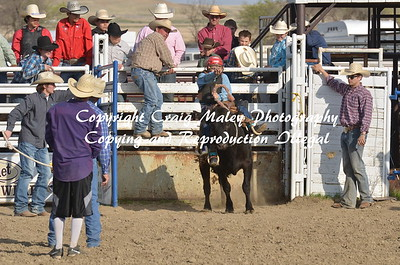 Steers Saddles 05-02-15