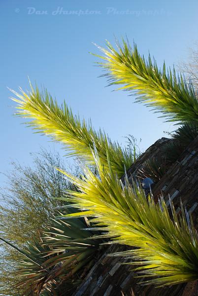 Desert Botanical_28.JPG