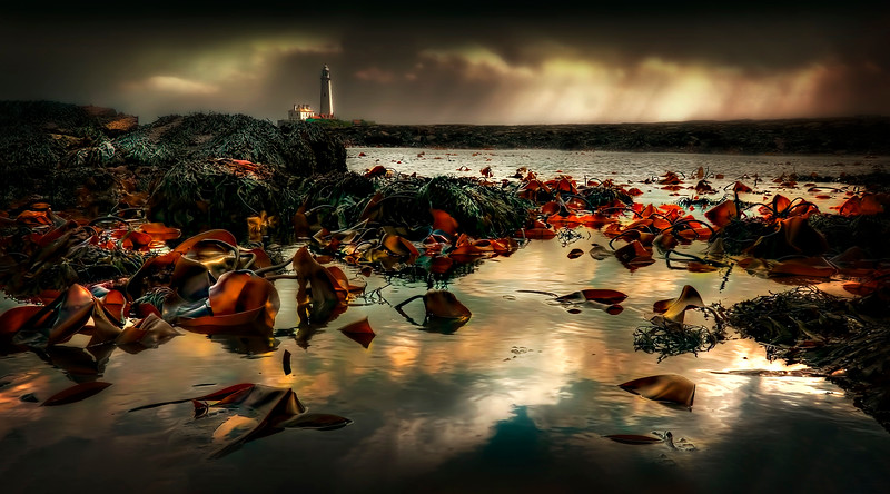 Seaweed and Rock Pools by Ray Bilcliff - www.trueportraits.com