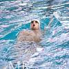 29_20141214-MR1_6715_Occidental, Swim