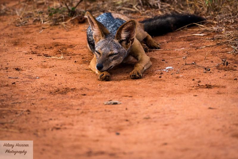 Kenya Wildlife-27.jpg