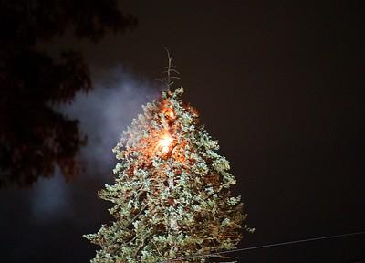 Tree Fire - 518 New Britain Ave., Newington, CT. - 7/7/21