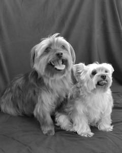 Sophie & Oscar