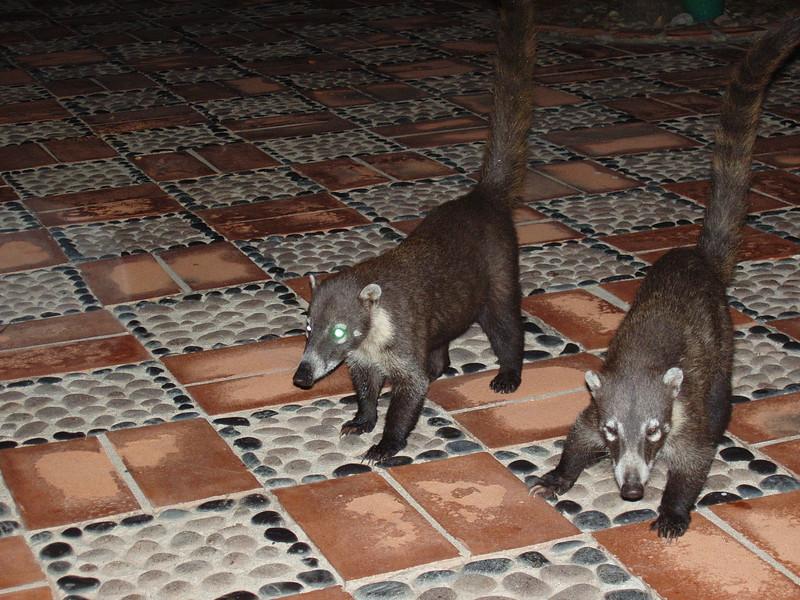 2007-11-30-0052-Las Alamandas in Jalisco, Mexico with Hahns-Coatis at Dinner.jpg