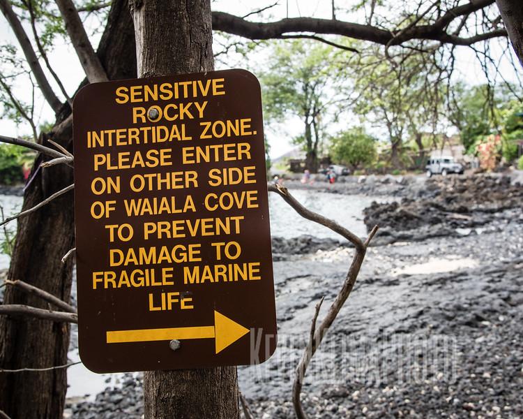 Sensitive Rocky Intertidal Zone